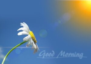Good morning images new for Morning Wishes
