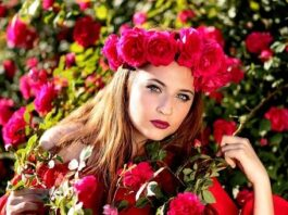 Red rose images